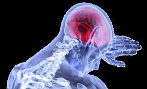 Mensch Gehirn